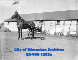 Camrose Annual Fair: horse, Miss Iowalto, driver, Shelt Forsythe, owner, Mrs. F. Rutledge.