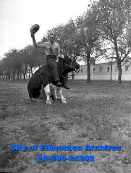 Spring Horse Show: Harold Girlitz and steer Playboy perform tricks.
