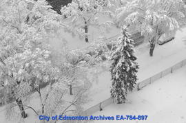 Spring Snow Storm - Image 4 of 6