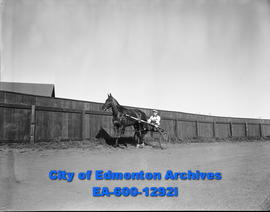 Harness racing at the Camrose Annual Fair.