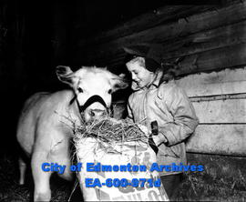 1948 Spring Livestock Show at the Exhibition grounds: Thommy Byers and his shorthorn calf.