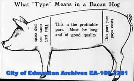 "What ""Type"" Means in a Bacon Hog (a drawing)"