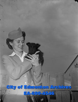 Trans-Canada Airlines stewardess Evelyn Johnson holds a wayward Scotch Terrier dog.