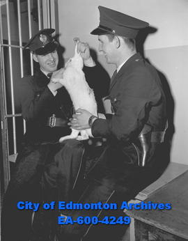 Constables Bob Boyle and K. Van Meer hold rabbit they saved from hungry dog.