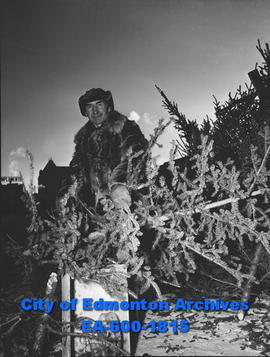 Joe Babich sells Christmas trees; hauls these trees by horse and buggy as far as fifty miles.