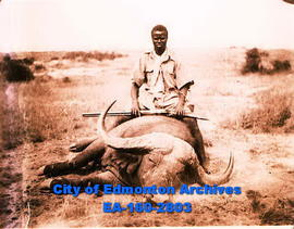 A hunter sitting on top of a water buffalo.