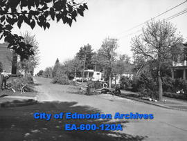 Edmonton Parks Department removing fluff shedding poplar trees from boulevards, to be replaced by...