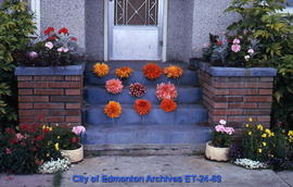 Dahlia blooms arranged on steps