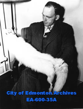Stan Peffer, Arctic trader from Aklavik, inspects an Arctic fox pelt in his room at the Corona ho...