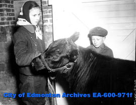 1948 Spring Livestock Show at the Exhibition grounds.