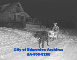 Larry Erickson, 11, of King Edward Park delivers the Edmonton Bulletin with the help of his sled ...