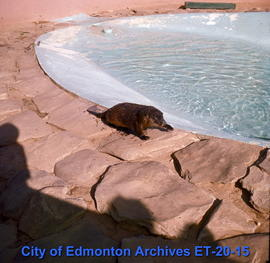 Storyland Valley Zoo Otter Pool